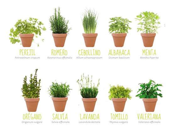Plantas arom ticas en casa un festival de aromas en la for Plantas de interior fotos y nombres