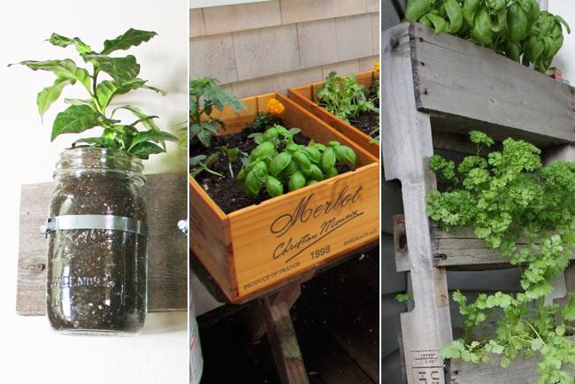 Plantas arom ticas en casa un festival de aromas en la - Plantar hierbas aromaticas ...