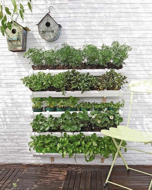 Plantas arom ticas en casa un festival de aromas en la - Plantas para jardines verticales ...